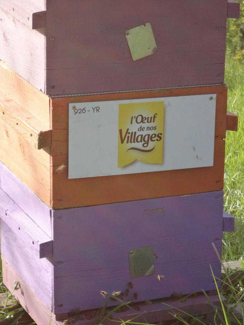 La ruche ENVIE D