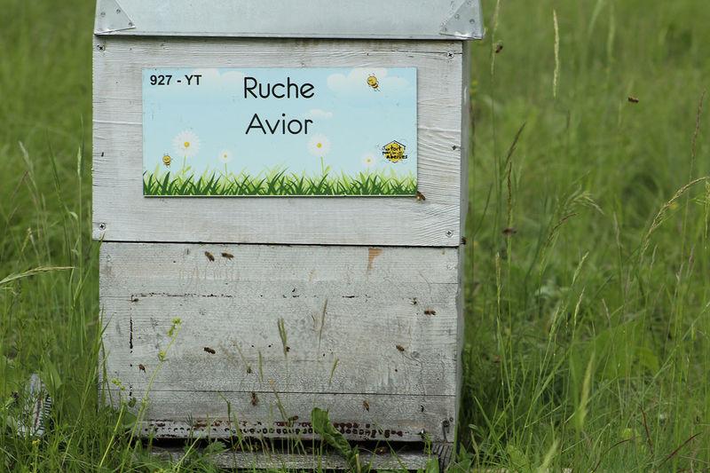 La ruche Avior