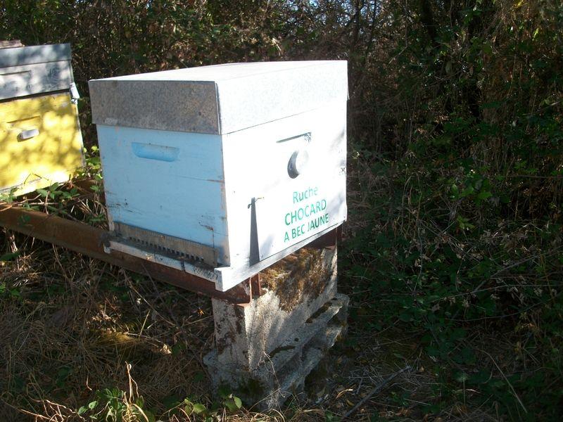 La ruche Chocard a bec jaune