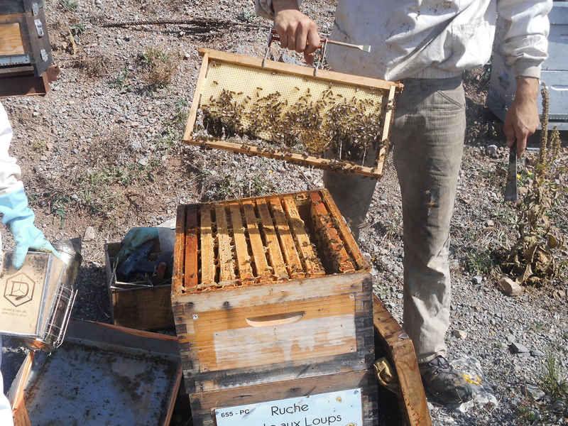 La ruche Sente aux Loups