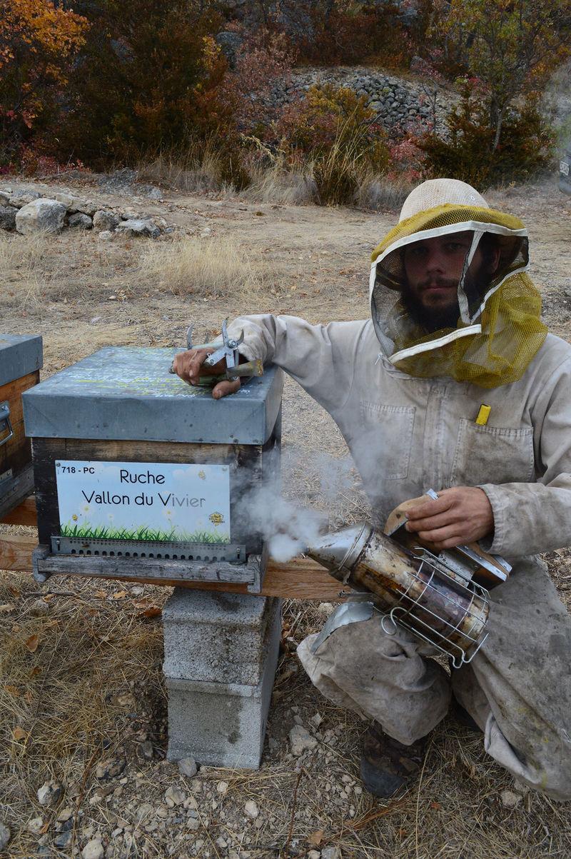 La ruche Vallon du Vivier