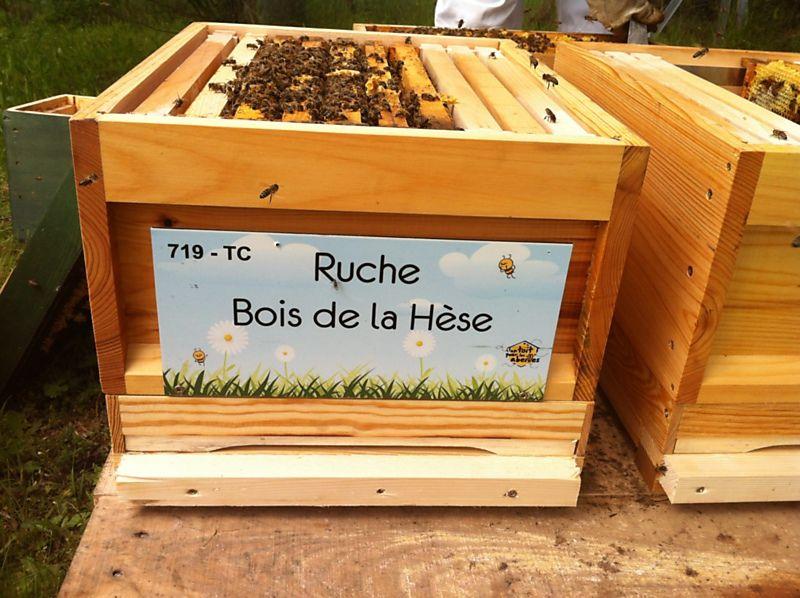 La ruche Bois de la Hèse