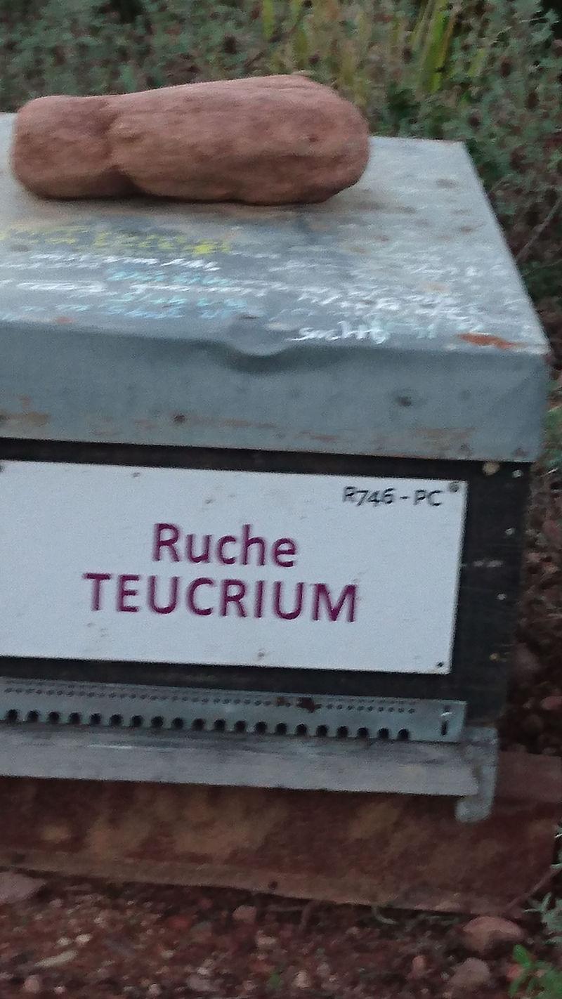 La ruche Teucrium