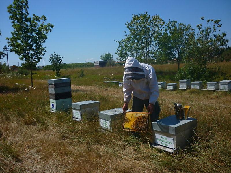 La ruche Choucas des tours