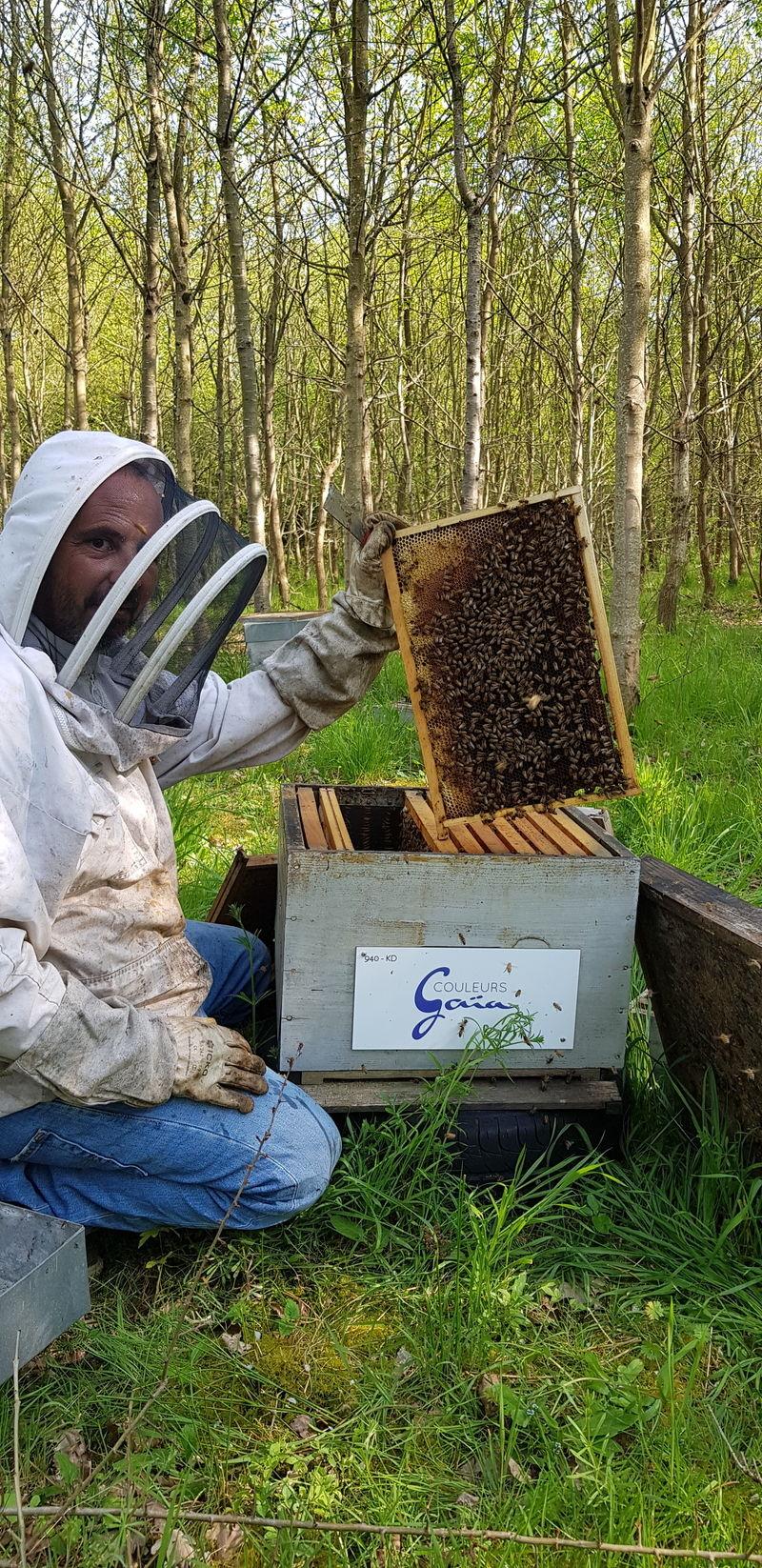 La ruche COULEURS GAIA