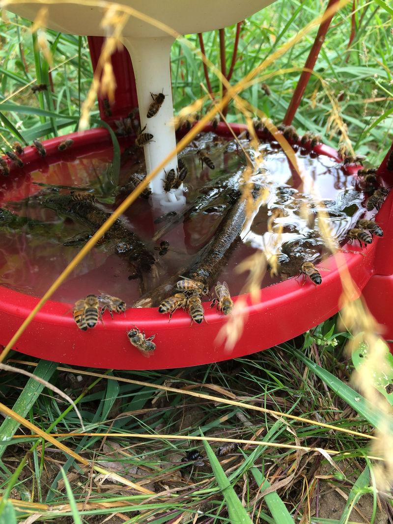 La ruche BEE ZEN DRINKS