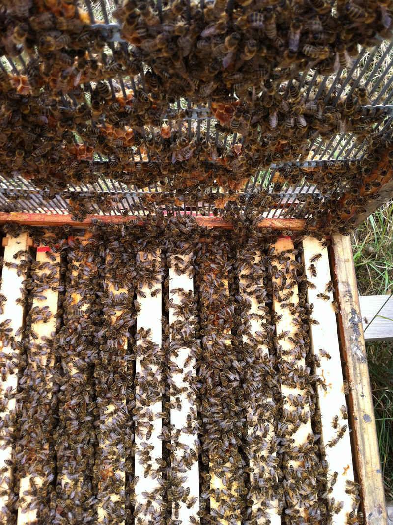 La ruche Izar