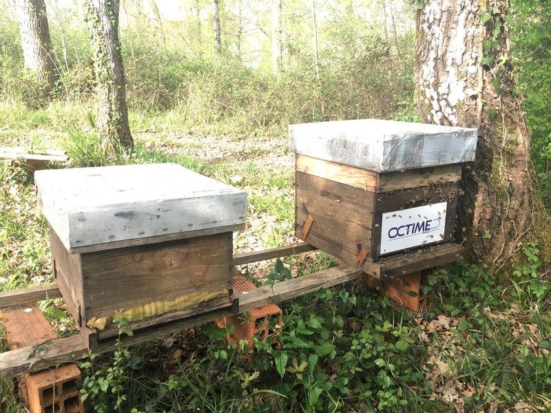 La ruche OCTIME