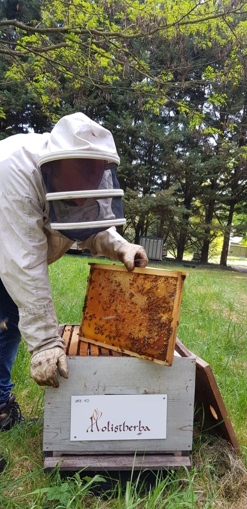 La ruche HOLISTHERBA Santé Nature