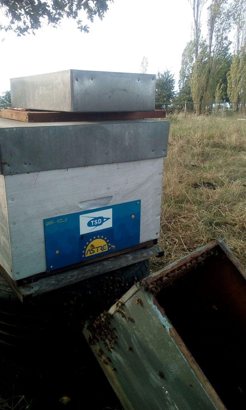 La ruche Astre - Transports Serge DERVAL
