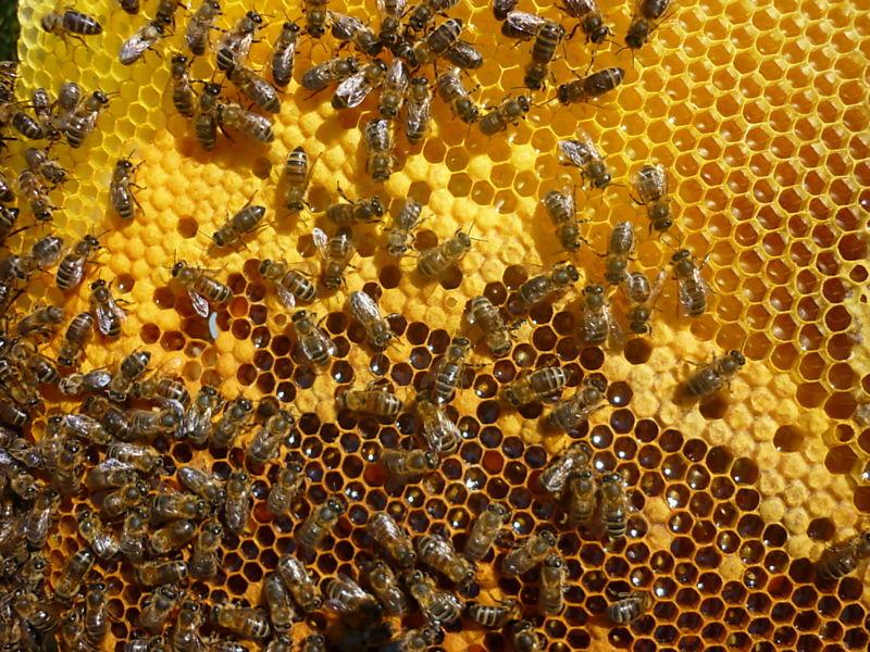 La ruche Mesange nonnette