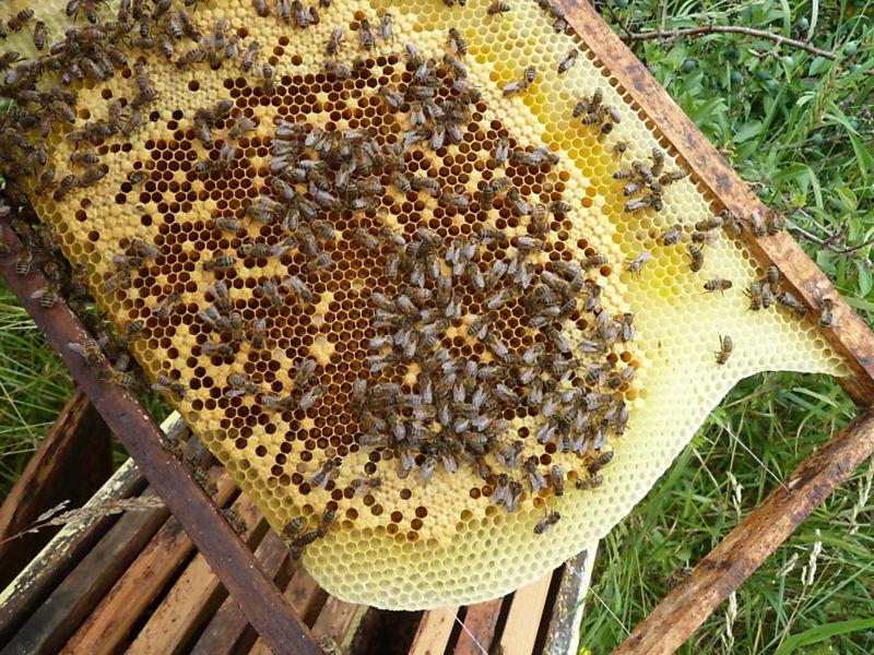 La ruche COVERPLA