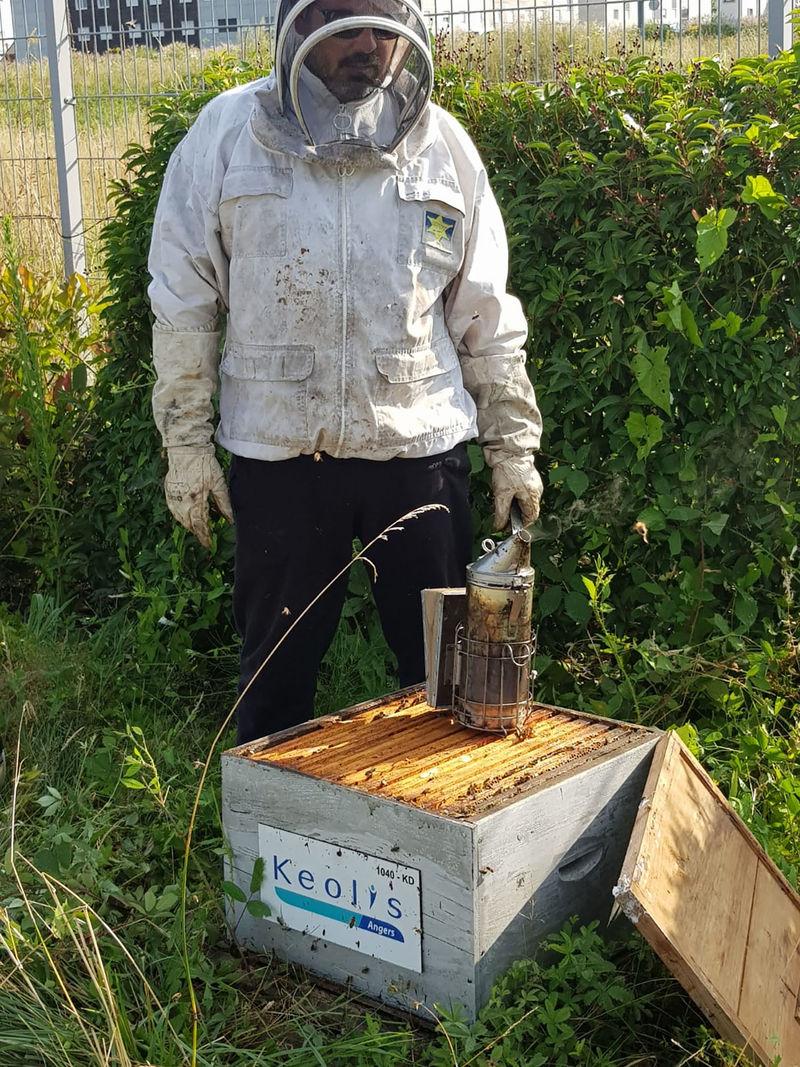La ruche Keolis angers