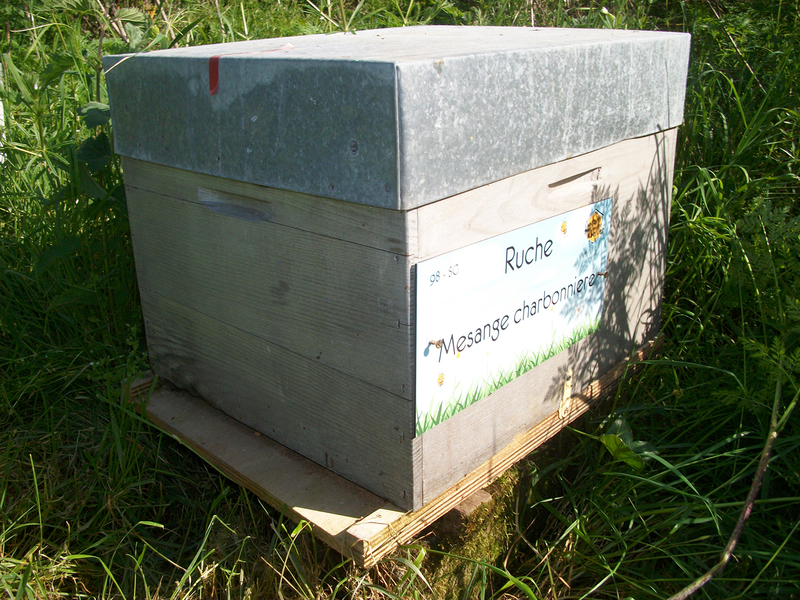 La ruche Mesange charbonniere