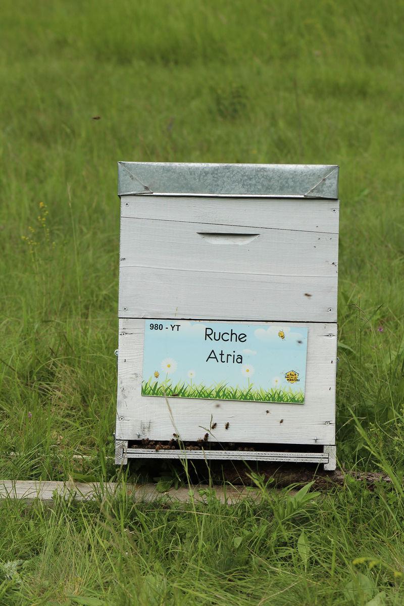 La ruche Atria