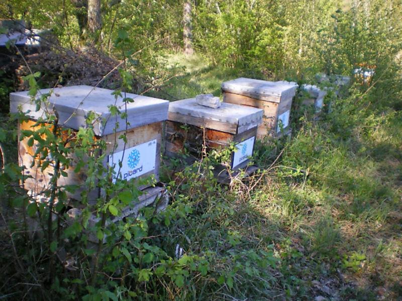 La ruche PICARD