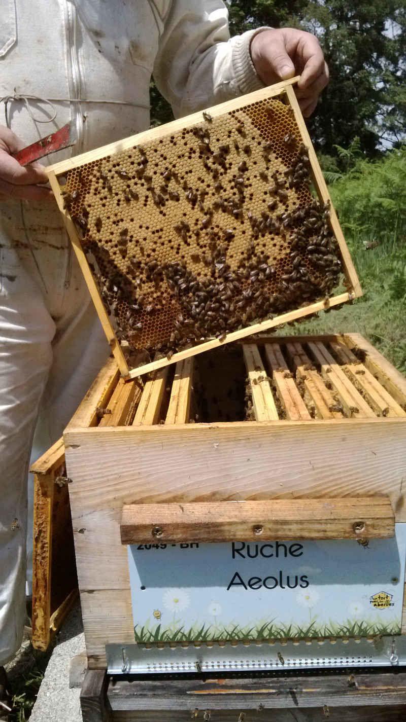 La ruche Aeolus