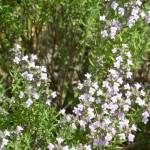 117-fleurs-insectes-ahermoumou