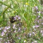 118-fleurs-insectes-ahermoumou
