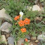119-fleurs-insectes-ahermoumou