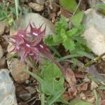 121-fleurs-insectes-ahermoumou