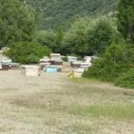 126-ruches