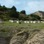 127-ruches