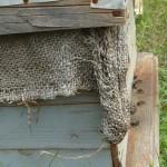 128-ruches