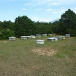 129-ruches