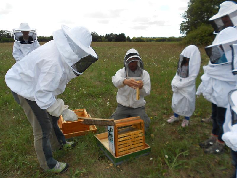 un blog pour les abeilles r colte de miel l ancienne. Black Bedroom Furniture Sets. Home Design Ideas