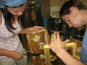 un blog pour les abeilles extraction miel 3. Black Bedroom Furniture Sets. Home Design Ideas