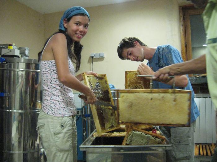un blog pour les abeilles extraction miel 4. Black Bedroom Furniture Sets. Home Design Ideas