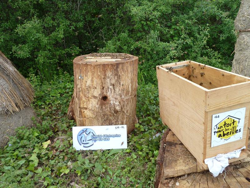 un blog pour les abeilles installation des abeilles dans une ruche tronc. Black Bedroom Furniture Sets. Home Design Ideas