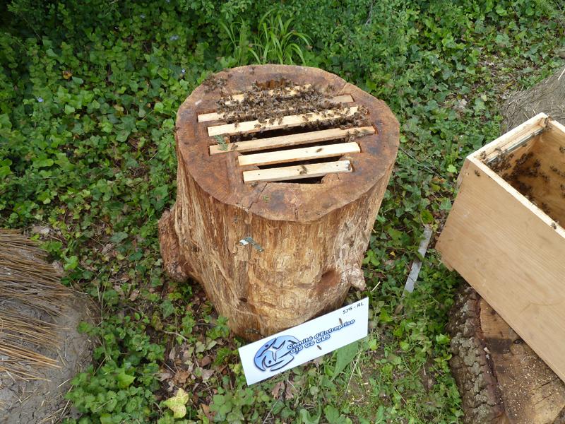 un blog pour les abeilles ruche tronc. Black Bedroom Furniture Sets. Home Design Ideas