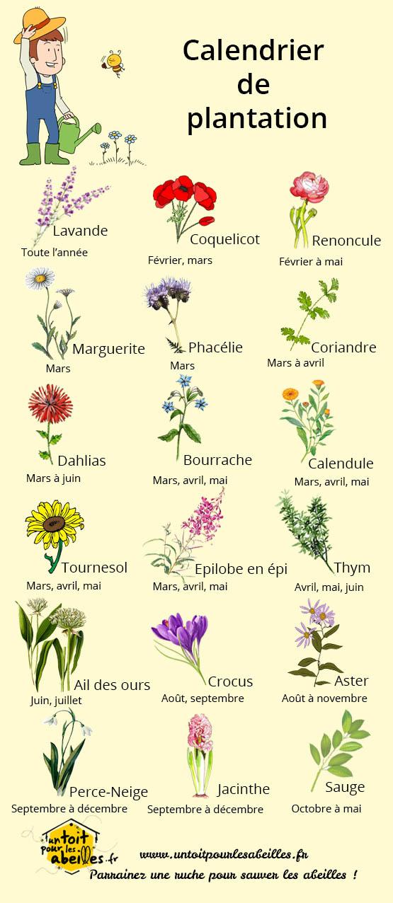 Un blog pour les abeilles fleurs mellif res for Plantation de fleurs