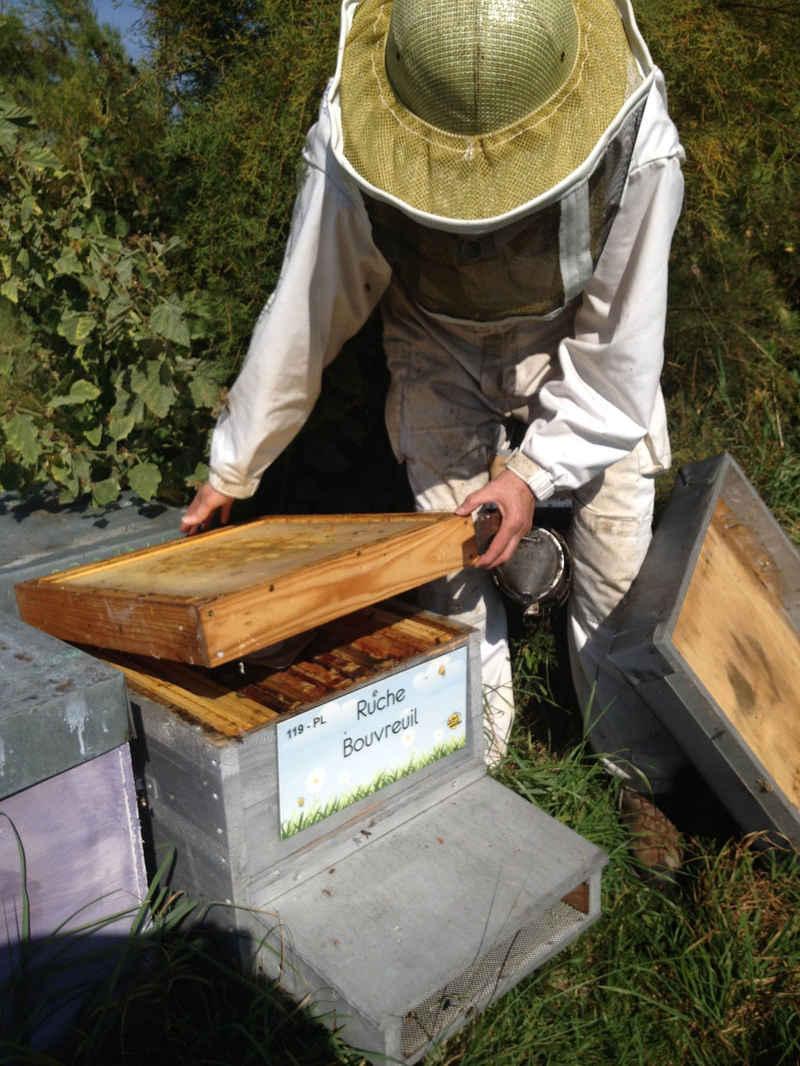 3-ruche-bouvreuil_39_2014-11-19_21-42-31