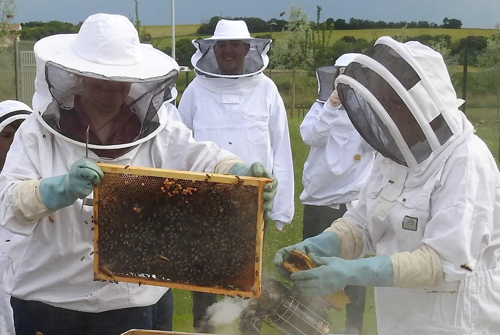 un blog pour les abeilles dscn2636. Black Bedroom Furniture Sets. Home Design Ideas