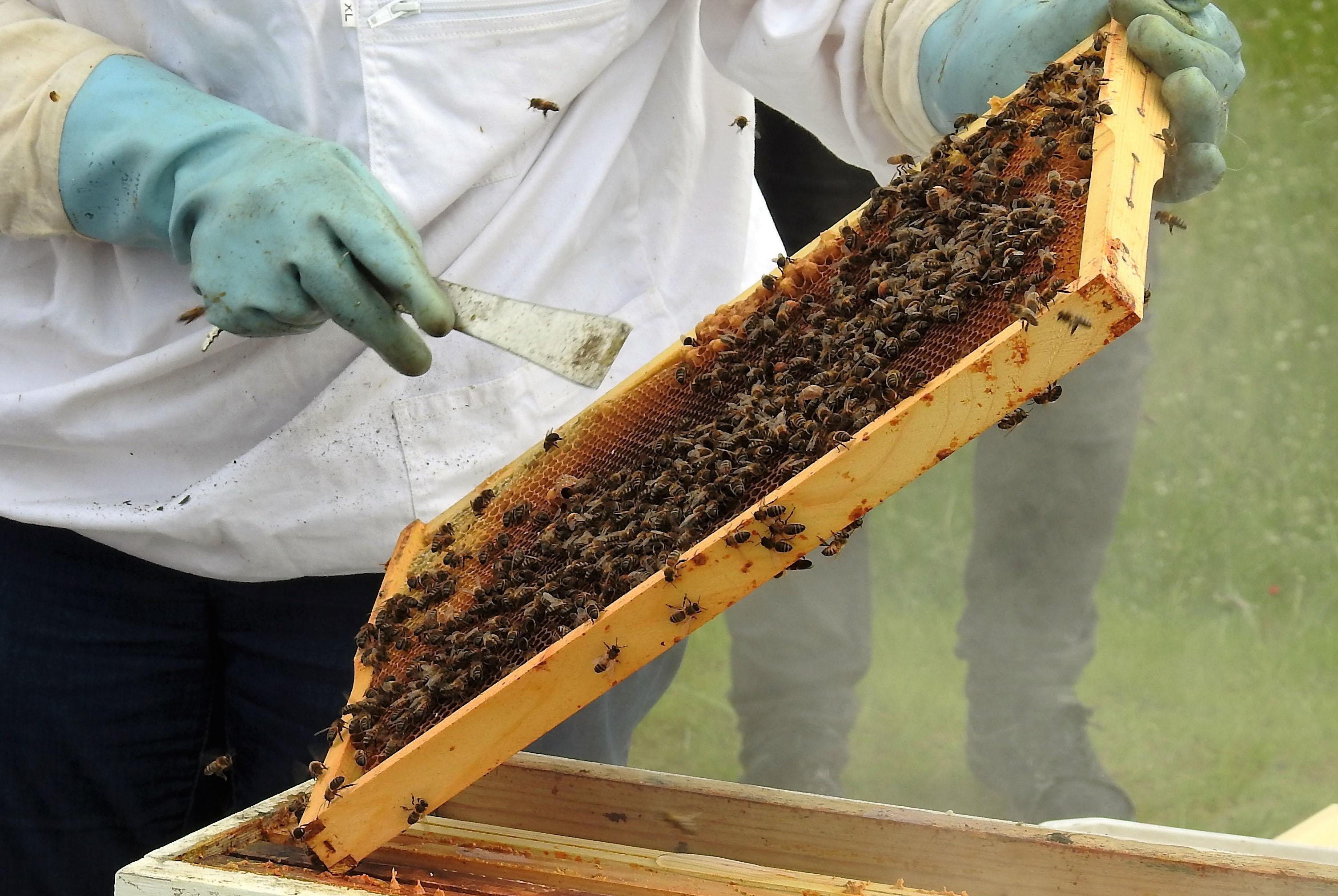 un blog pour les abeilles dscn2637. Black Bedroom Furniture Sets. Home Design Ideas