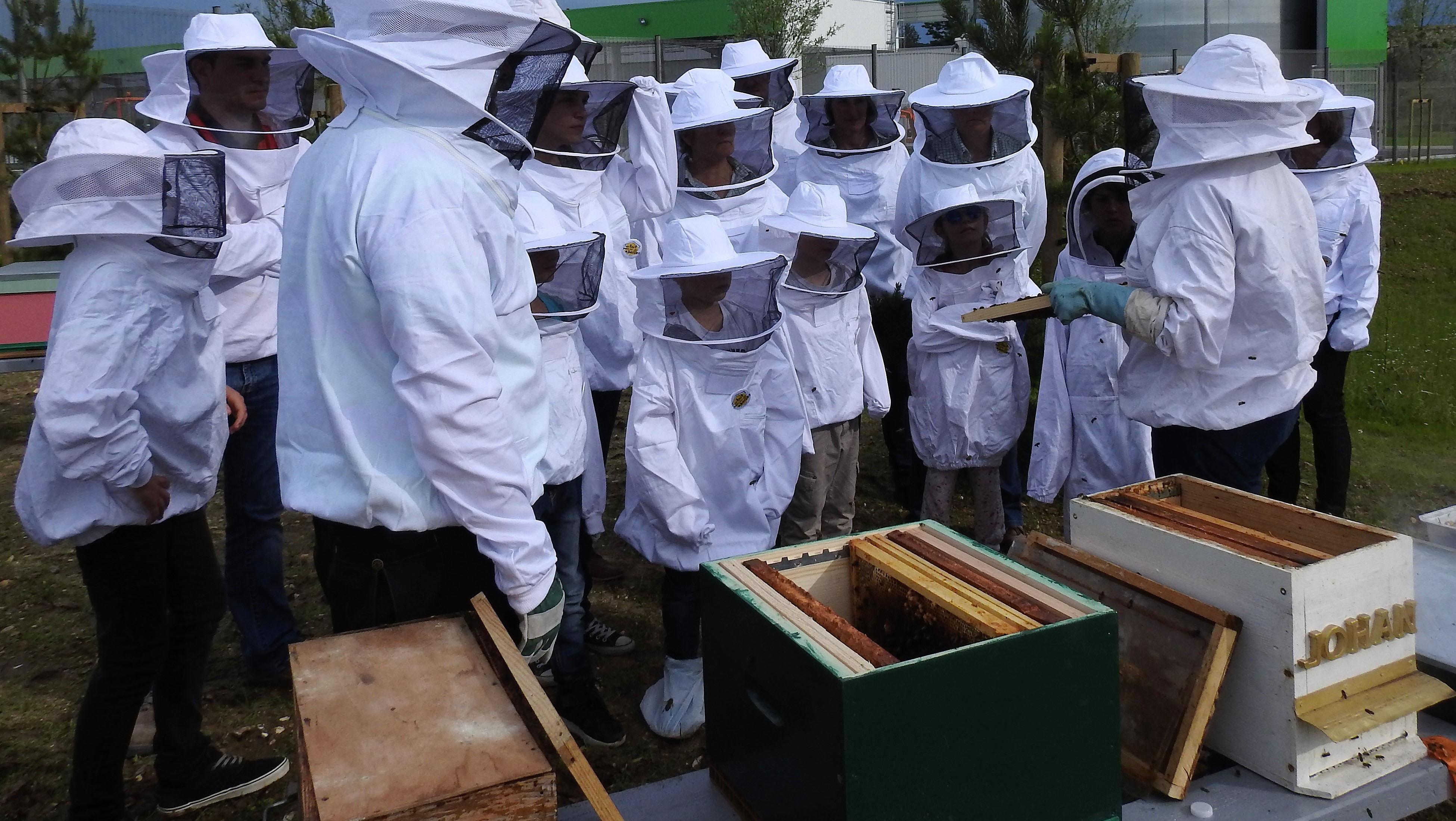 un blog pour les abeilles dscn2643. Black Bedroom Furniture Sets. Home Design Ideas