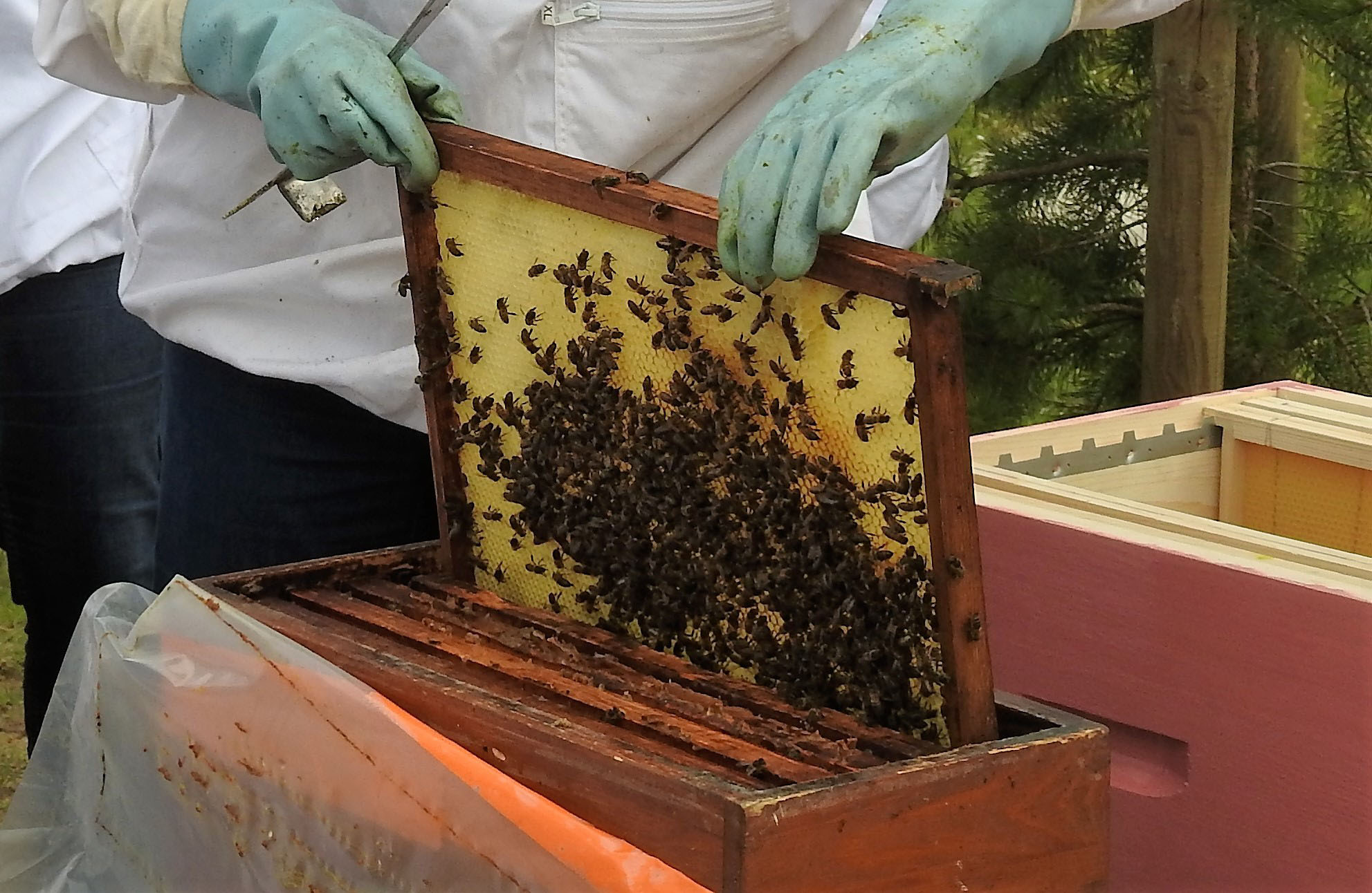 un blog pour les abeilles dscn2665. Black Bedroom Furniture Sets. Home Design Ideas