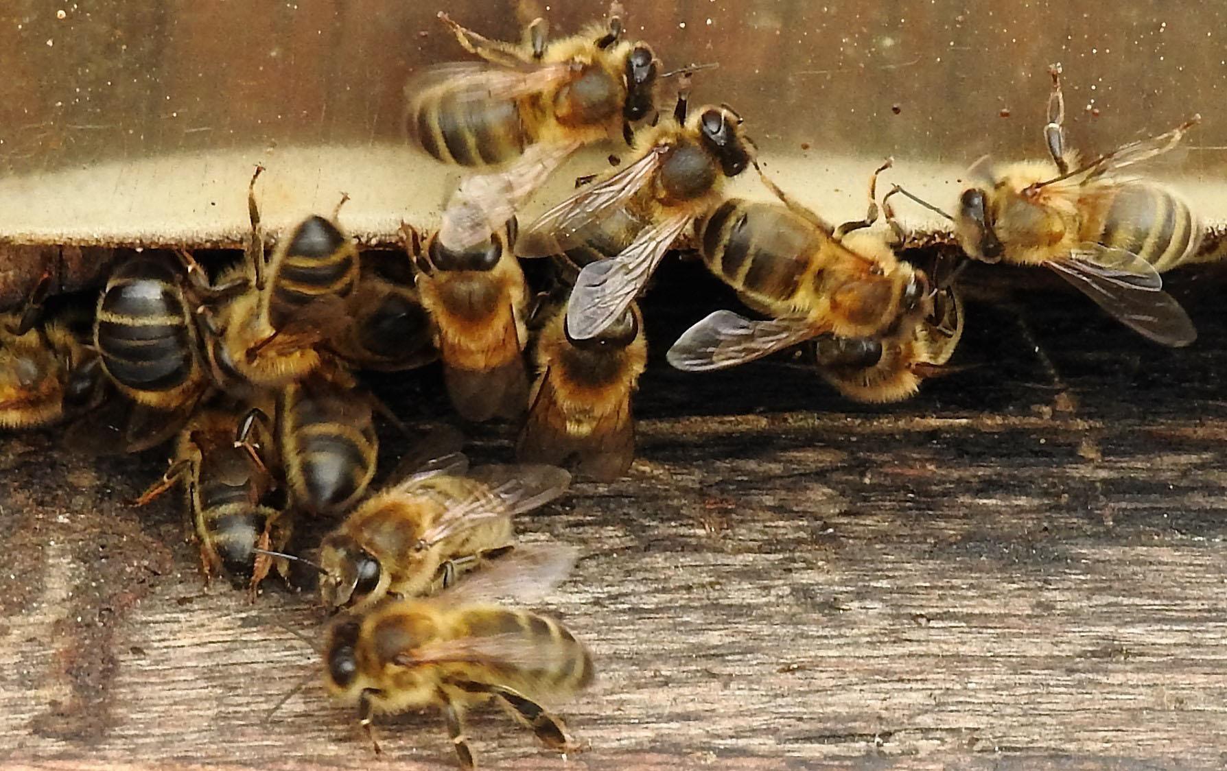 un blog pour les abeilles dscn2669. Black Bedroom Furniture Sets. Home Design Ideas