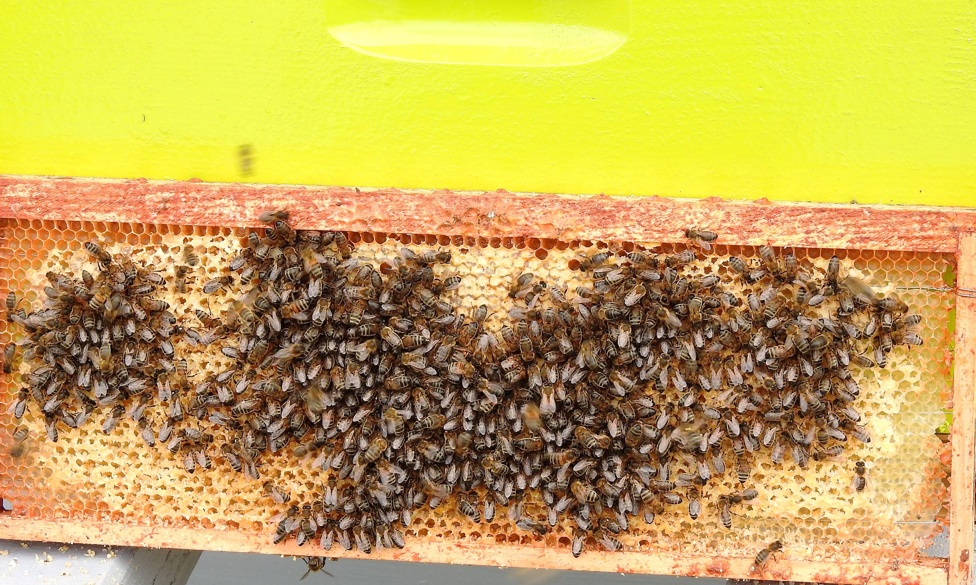 un blog pour les abeilles dscn2672. Black Bedroom Furniture Sets. Home Design Ideas