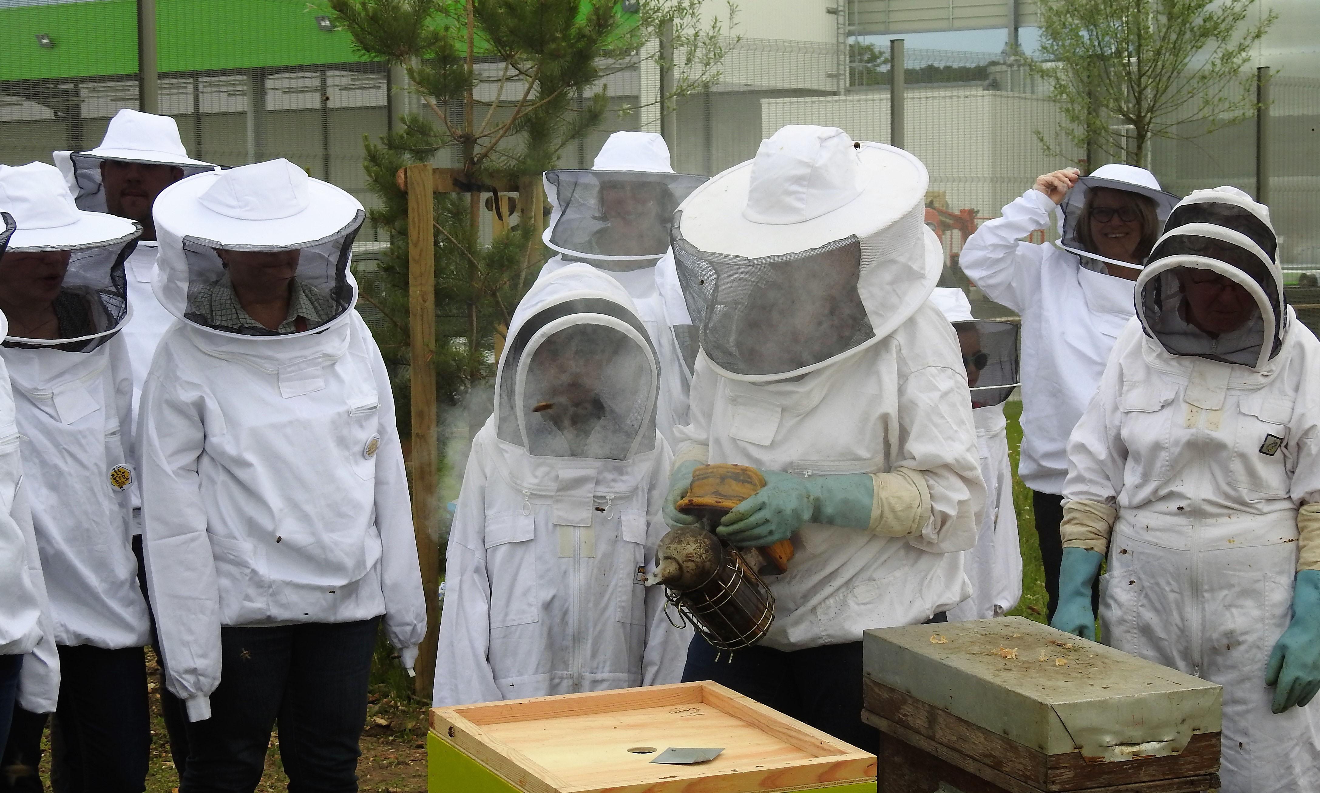 un blog pour les abeilles dscn2697. Black Bedroom Furniture Sets. Home Design Ideas