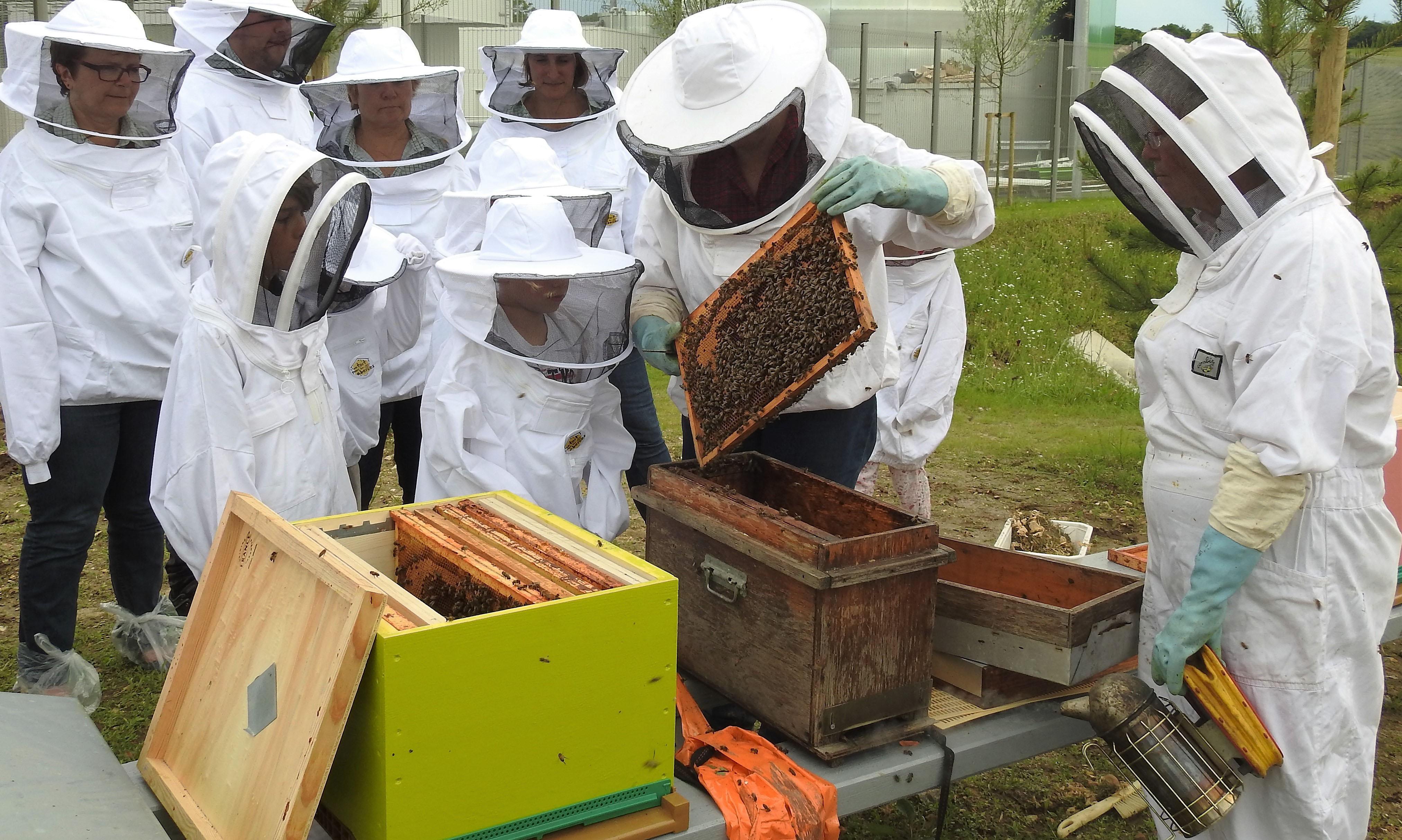 un blog pour les abeilles dscn2704. Black Bedroom Furniture Sets. Home Design Ideas
