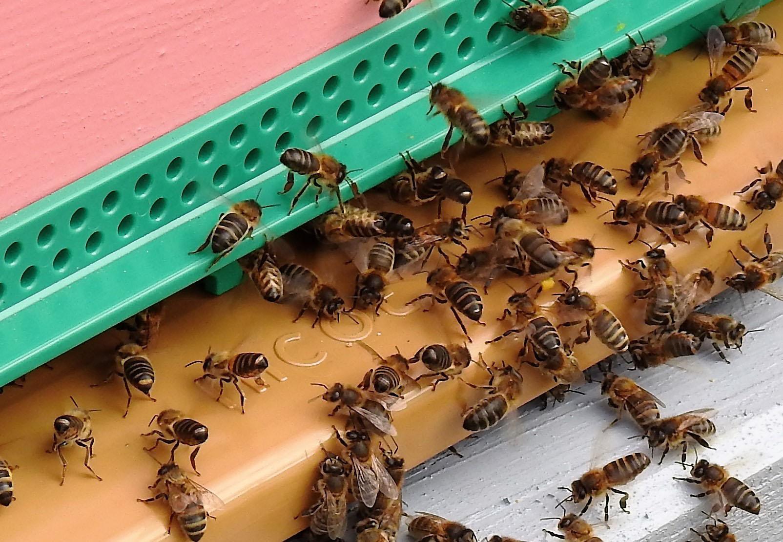 un blog pour les abeilles dscn2714. Black Bedroom Furniture Sets. Home Design Ideas
