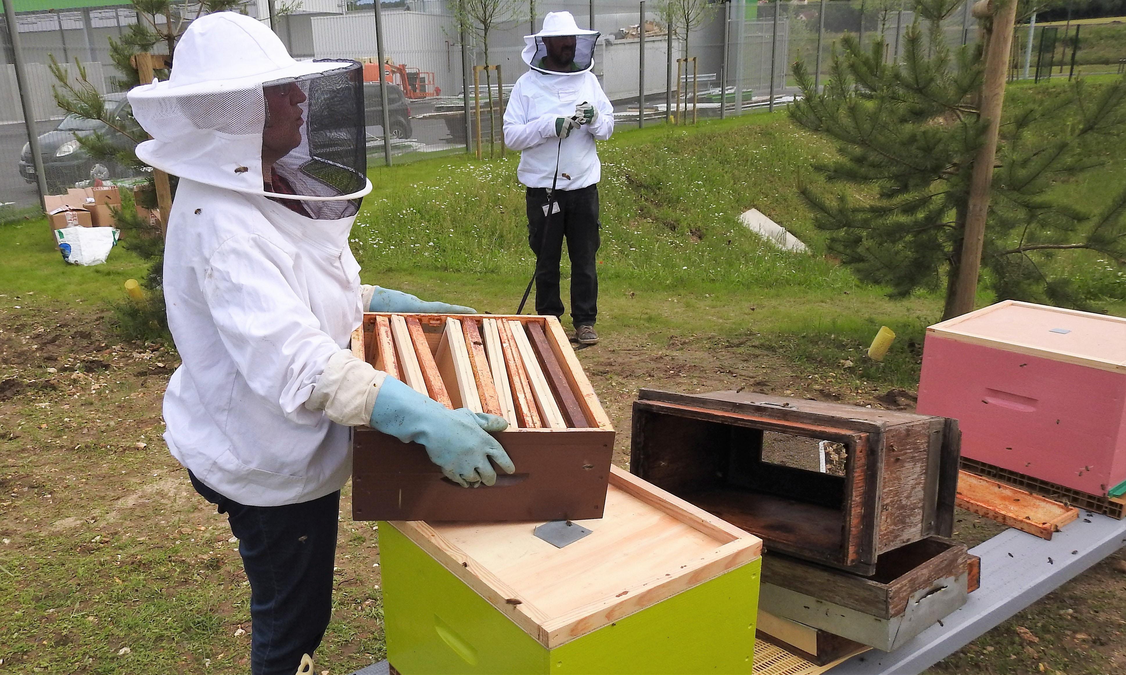 un blog pour les abeilles dscn2720. Black Bedroom Furniture Sets. Home Design Ideas