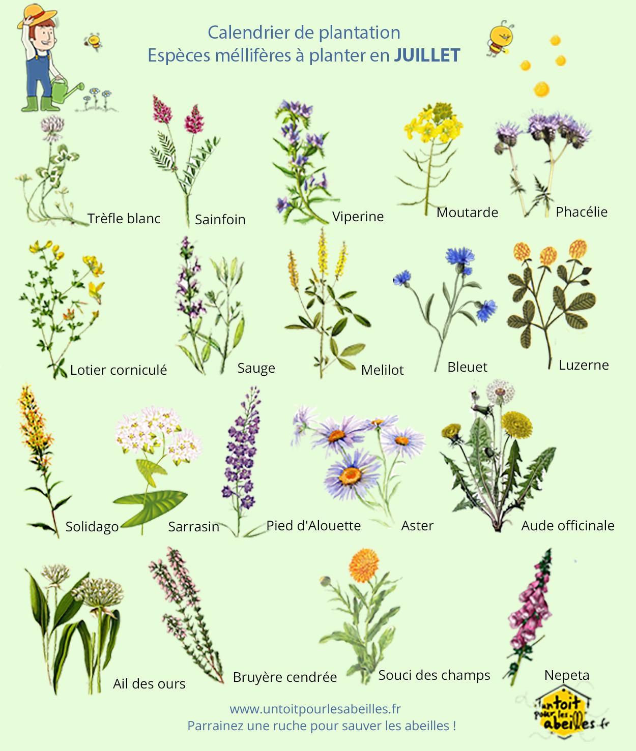 un blog pour les abeilles » fleurs mellifères ; biodiversité