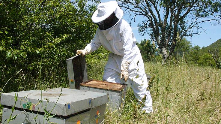 femme apiculture cherche homme site de rencontre espagnol payant